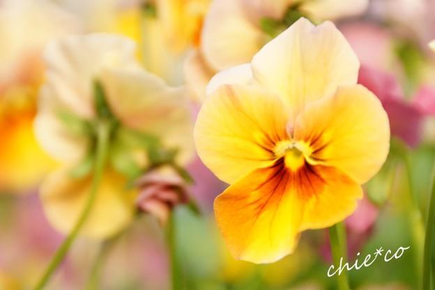 botanical garden-270