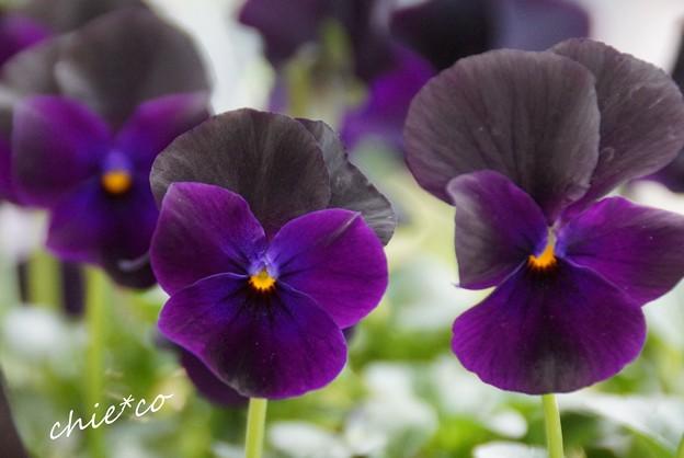 botanical garden-242