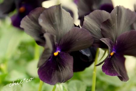 botanical garden-240
