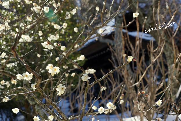 雪彩の北鎌倉-065