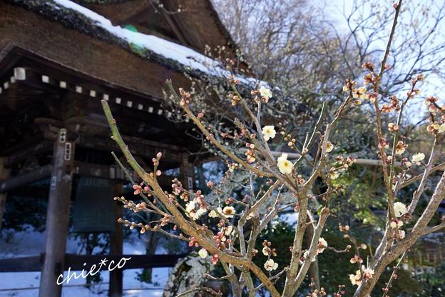 雪彩の北鎌倉-069