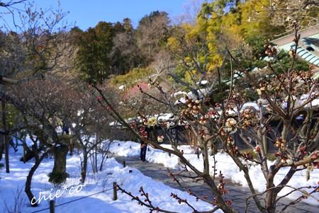 雪彩の北鎌倉-071