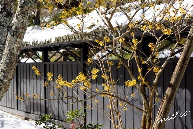 雪彩の北鎌倉-196