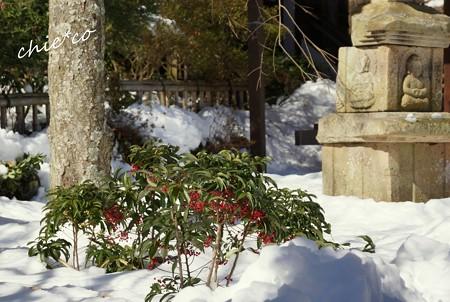 雪彩の北鎌倉-088