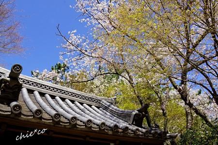 三渓園~春~-025