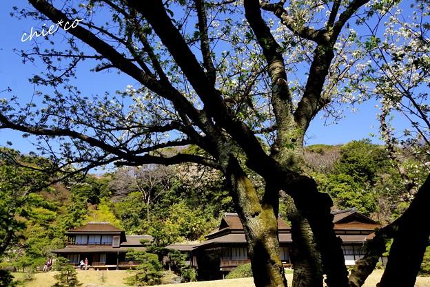 三渓園~春~-121
