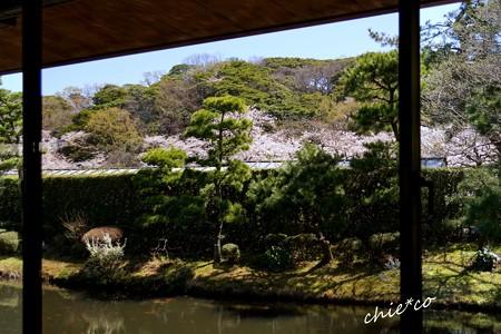 三渓園~春~-126