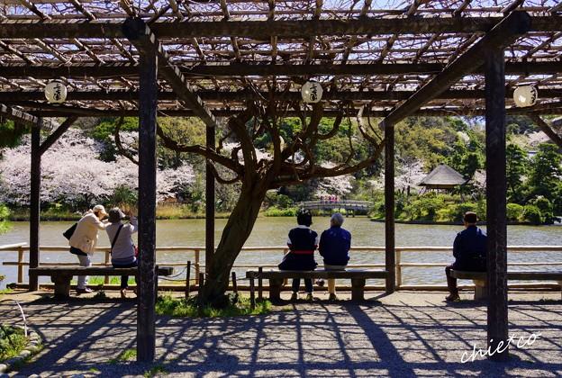 桜景色を楽しむ人々・・