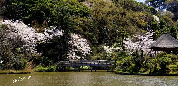 三渓園~春~-132