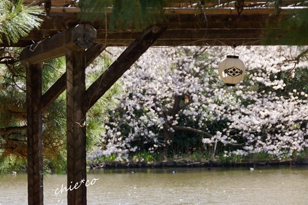 三渓園~春~-135