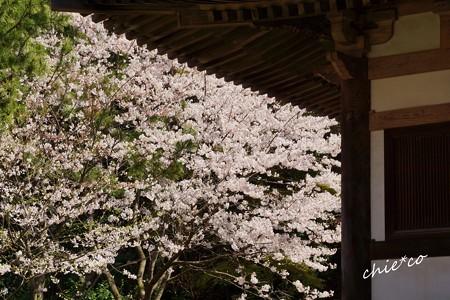 三渓園~春~-186