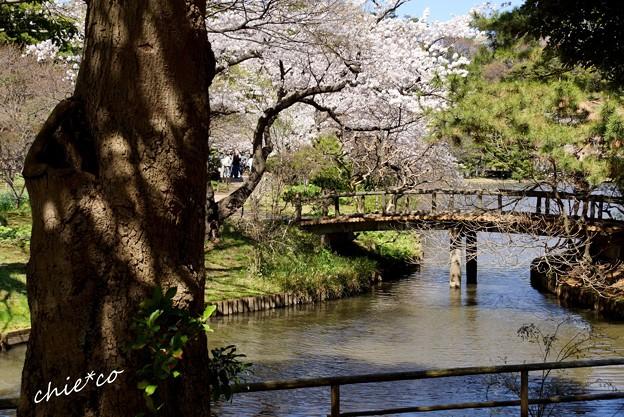 三渓園~春~-188
