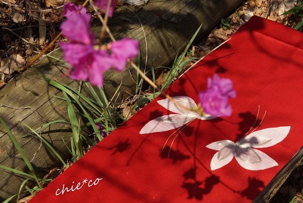 ベンチに敷かれた帯に舞う蝶・・