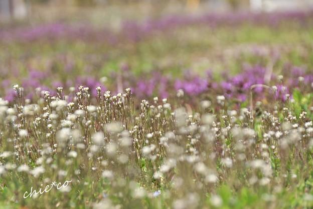 春の野原・・