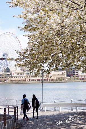みなとみらい桜景色-002