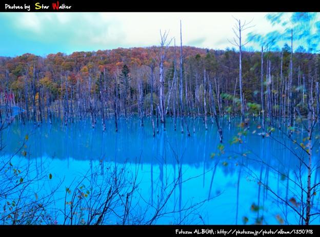 白金 青い池1
