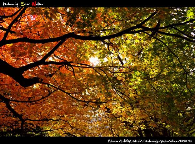 秋の、空の絨毯