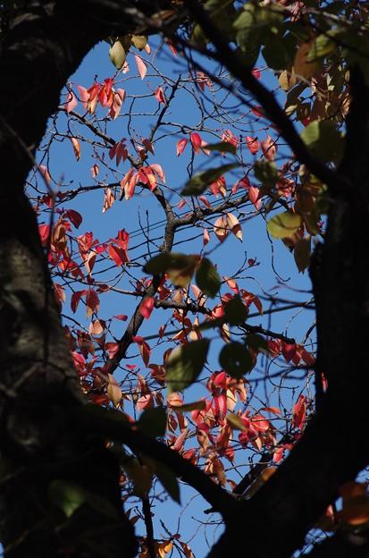 玉串川の桜 2
