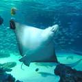aquarium(3)