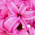 ポットの花