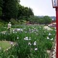 豊川 加茂菖蒲園へ