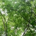 心地よい涼しさの林道を歩く