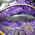 Photos: 渓の恵み 岩魚です