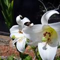 白い花と白い蜘蛛