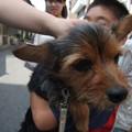 Photos: 来夢は変わらずとっても明るく犬好きな犬のまんま
