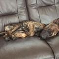 Photos: 長い手足を上手に折りたたみ寝ている