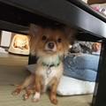 Photos: 私の側、そして机の下