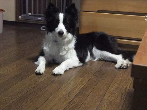 Photos: 犬の居ない場所を選び