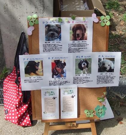 保護犬情報