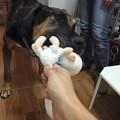 Photos: よし!ルナ、チチさんとぬいぐるみで遊ぼう♪