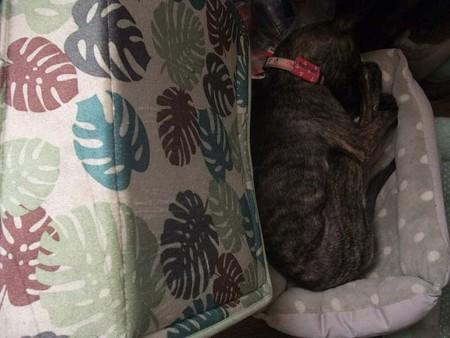 その横のロトが寝てたちいさなベッドで小さくなって寝る葉月。
