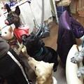 Photos: おやつに群がる犬達