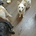 Photos: 犬が居ようが・・・飛んでくる