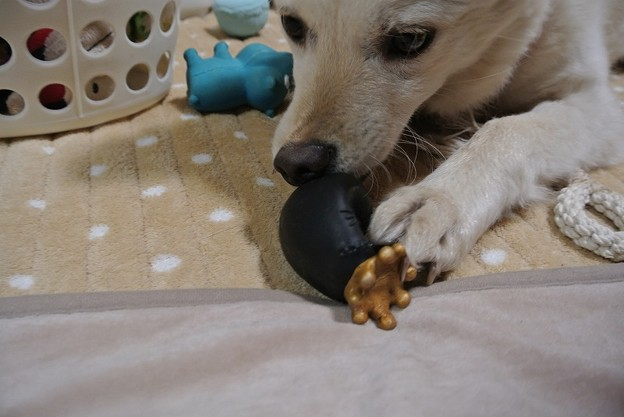 Photos: やっぱりおもちゃで