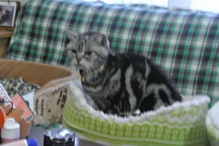 猫ちゃんもうーちゃんを発見!