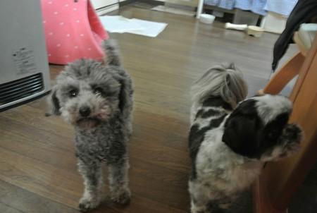天心(居候)と3姉妹のボス(右)