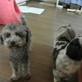 Photos: 天心(居候)と3姉妹のボス(右)