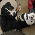 Photos: 小型犬とも平和的です