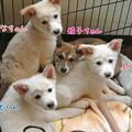 Photos: 仔犬4頭
