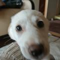 Photos: いらっしゃ~い♪  (ふく)