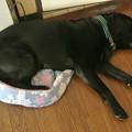 Photos: 悟天は小型犬ベッド