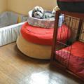 Photos: 3段ベッド