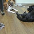 Photos: 常に犬とともに行動し