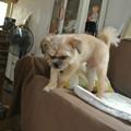 Photos: ソファーに登ったり