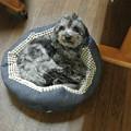 Photos: たまごちゃんに貰った春ちんのおニューのベッド