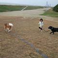 Photos: 散歩させられ中・・・